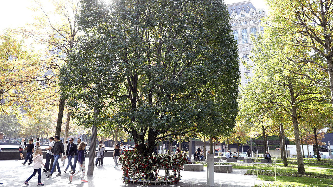 Sunlight shines down on the Survivor Tree. Red and white flowers ring the base of the tree. Visitors walk by to the left and several people sit at benches to the right.
