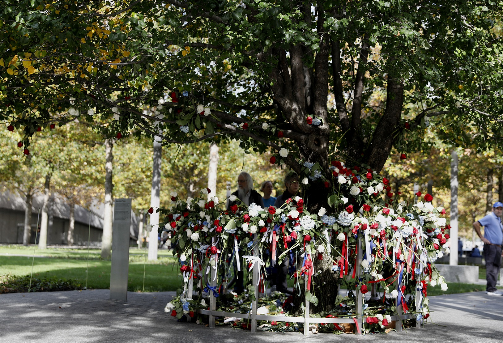 A Callery pear tree known as the Survivor Tree is adorned with red, white, and blue ribbons and flowers on a fall day.