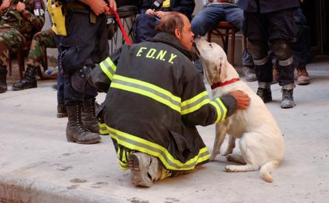 A yellow Labrador retriever licks the face of a man kneeling who wears an FDNY jacket and work boots.