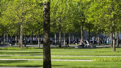Rows of green grass, ivy beds, and granite pathways continue parallel to one another across the Memorial Plaza. Nothing is in the foreground except for the trunk of a single oak tree. In the distance, people walk and sit under the Plaza's many trees.