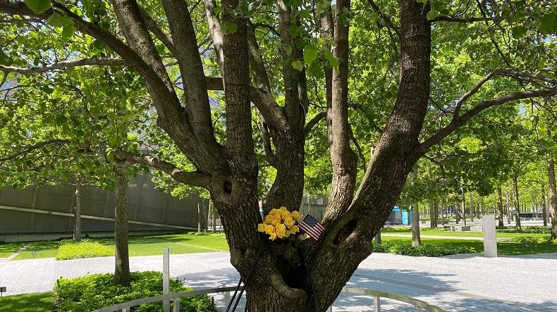 A bouquet of yellow roses and an American flag rest on the branches of the Survivor Tree.